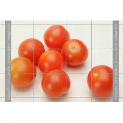 Tomates cheri-4