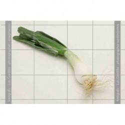 Cebolla tierna-1