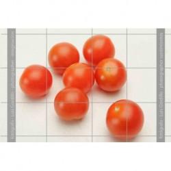 Tomates cheri-5