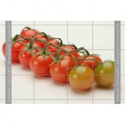 Tomates cheri-3