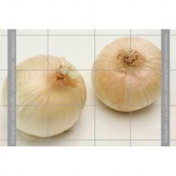Cebolla dulce 1