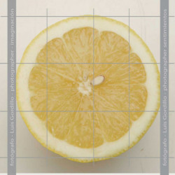 Limon mitad