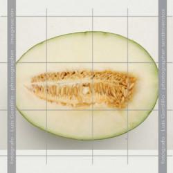 Melon medio