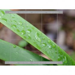 Hojas verdes y agua