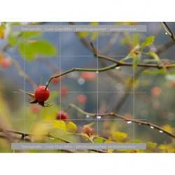 Gotas de agua fruto rojo
