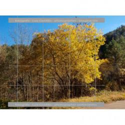 Arbol en otoño amarillo