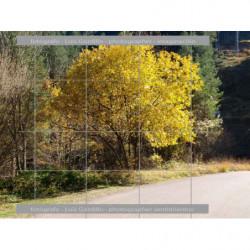 Color a la carretera