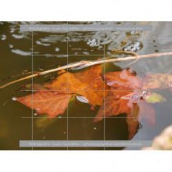 Hojas en estanque