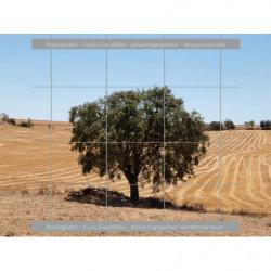 Mitad del campos de Lleida