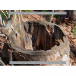 Dentro del tronco