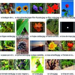 Flores y plantas Pack 20...