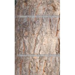 Corteza pino
