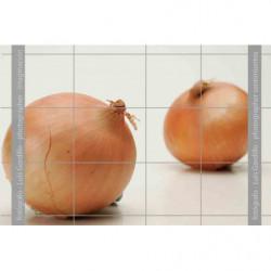 Cebolla grano oro-1
