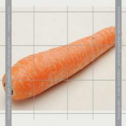 Zanahoria granel unidad