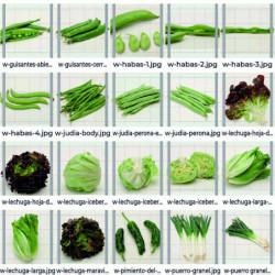 Pack de hortalizas 9