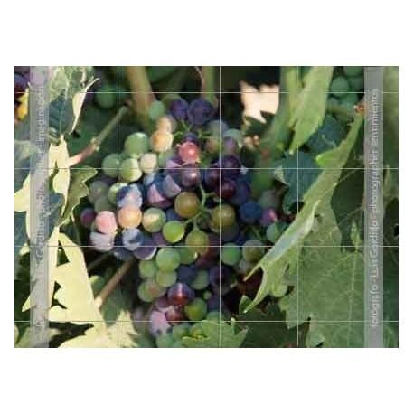 Uvas negras y verdes