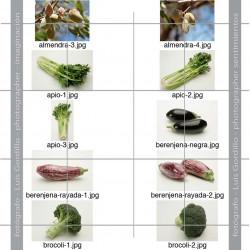 Pack FV-2-1 hortalizas y frutas