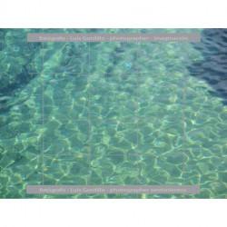 Fondo mar verde